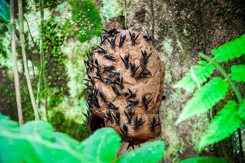 Weird Amazonas Animals