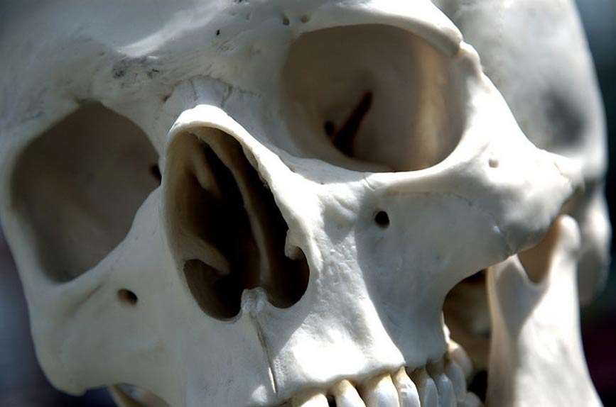Giant 7 – 8 Foot Skeletons Uncovered in Ecuador sent for Scientific Testing